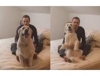 黃金獵犬玩「信任遊戲」 倒進主人懷裡表情超甜蜜!