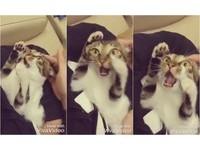 別看BOB了來打架!貓咪反被巴頭 傻眼定格:救駕啊啊啊