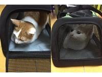 影/快帶朕去尋江山!貓咪看到外出籠就衝 還要求拉拉鍊