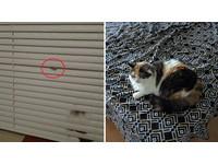 百葉窗驚見舌頭「快速伸縮」 主人:貓咪是除塵好幫手
