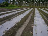 寒流南下 農糧署籲農民適度採取農作物防寒措施