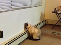 貓狗好內疚...也會「面壁思過」? 小心這是一種病!