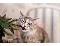 喵星人思維怪怪的? 貓咪「5大怪行為」...通通都有原因