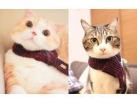 圍上它貓咪也能變歐巴!天冷了給喵星人圍條專屬圍巾吧