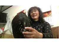 橡皮筋口感?魚池撈到「超巨大圓蚌」 婦雙手捧:當傳家寶