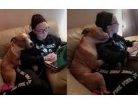 病狗差點安樂…女大生緊急認養 結果發現牠來「抱恩」的