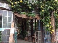 踏進森林系宮崎駿動畫場景 台南「千畦種子博物館」