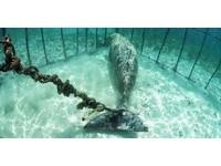 潛水驚見海牢籠...繩緊綁「美人魚」長尾 悲傷漂浮頻望外