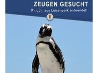 德國動物園「漢波德企鵝」失蹤! 管理員怕牠無法生存