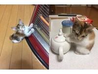 電暖器被關! 小三花「勉強改用茶壺」:手手怕冷咩~