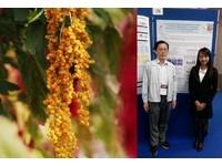 「台灣紅藜」能防大腸癌前期病變? 北醫大研究有譜