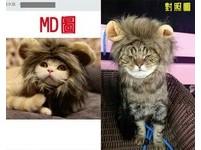 獅子頭開心到貨...但跟網美貓不太一樣? 肉太多臉被揪成團
