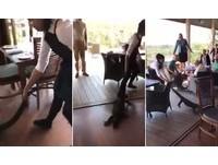 180cm巨蜥闖入!客人嚇到跳上椅 女店員徒手拽尾拖走