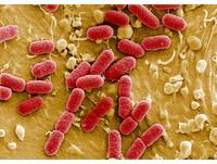 歐盟「超級細菌」抗藥性升高 每年約有2.5萬人喪命
