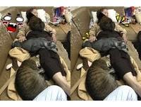 不用棉被了!阿嬤躺沙發... 下秒貓咪湧上「從頭蓋到腳」
