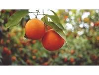 多吃水果有益身體健康! 研究:「柑橘類」防肥胖慢性病