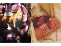 腎結石走了...天使橘貓回到媽媽身邊 這次成了她女兒