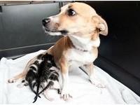 孩子秒被賣...狗媽媽傷心欲絕 小奶貓讓牠找回生命的意義