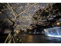 越夜越美麗!新竹公園不摸黑 夜櫻步道超浪漫