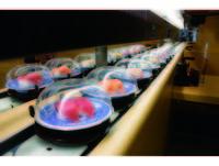 除了漁港直送鮮魚 藏壽司好吃祕訣是這個溫度的醋飯
