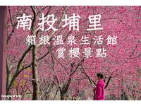 南投「箱根溫泉」滿開 可以免費進入園內賞櫻花