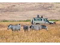非去不可!肯亞狩獵車巡遊 Discover動物大遷徙