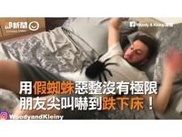 用蜘蛛惡整無極限 男人也嚇到狂尖叫還跌下床!