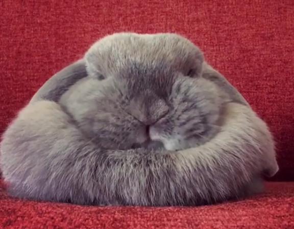 怒吼伸个懒腰.萌兔打哈欠1秒崩坏斯巴达睡醒妹子刀手包图剪表情a懒腰