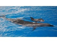 喝不到母乳 花蓮海豚寶寶性命堪憂