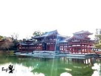 與湖水完美對稱的世界遺產! 日本宇治近千年「平等院」