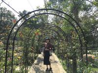 苗栗免費景點 一次能看到200種多肉植物、玫瑰花!