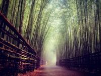 特搜「全台5處竹林秘境」!秒飛「京都嵐山」忘憂森呼吸