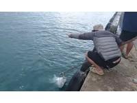 違法垂釣牛港鰺賣2380元 潛水教練心痛:每次下去都要看牠