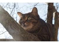上面風景是有多好? 貓咪老愛往高處爬「背後原因」...