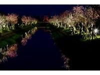 只有10天!宜蘭私房夜櫻景點 「羅莊櫻花步道」點燈