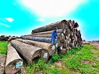 不用再問!超吸睛的巨木群在這拍 IG熱議的清水伐木場