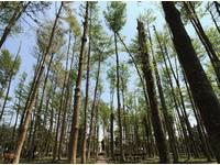 台南社區竟有森林!300株小葉欖仁成「小阿里山」秘境