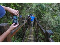 樂水部落1日遊「宜蘭130秘境」全台檜木密集度最高