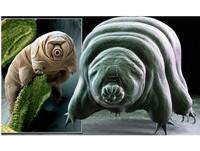 比蟑螂還強!地球最強生物「水熊蟲」 冷凍30年大復活