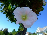 心情不好就去買朵花! 植物有神奇「療癒」力量你知嗎?