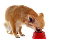 吃完飯...還想再吃! 狗狗「用鼻子頂頂」5個超萌原因