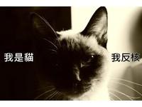 「我是貓,我反核」 大支為被遺忘的動物發聲