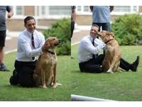 愛犬抗病魔半年病逝... 湯姆哈迪痛別:謝謝你給的愛