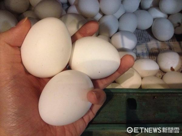 ▲▼雞蛋示意圖,新LOGO版。(圖/示意圖/記者李佳蓉攝)