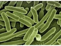益生菌、乳酸菌真的是好菌? 營養師:要慎選