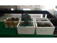 「富山漁場」岸邊盜採珊瑚!男當場遭逮 分裝3箱重47公斤