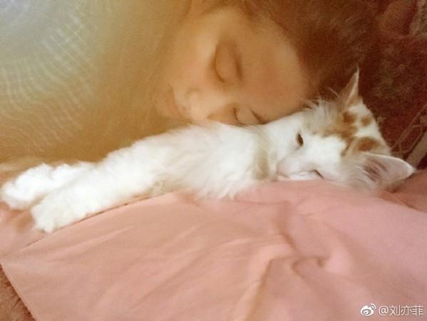 ▲劉亦菲閉眼靠著貓咪。(圖/翻攝自劉亦菲微博)