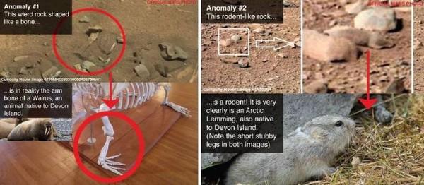 ▲▼火星照片被拍出有許多與地球生物相似的畫面 。(圖/翻攝自BuzzFeed網站)