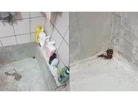 浴室洗澡驚見「爆肥大蜈蚣」 他急拍照求救...網友建議超噁!
