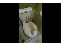 超商廁所「青屎」亂噴! 店員無奈:清了1hr晚上噁到吃不下